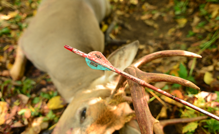 Find out how to avoid the most common bowhunting pitfalls during the first week of archery season!