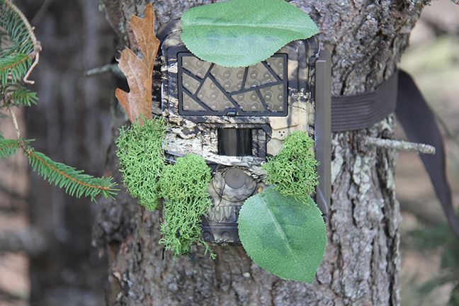 Trail camera hidden with leaves