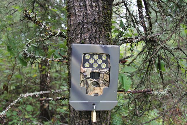 Locked up trail camera