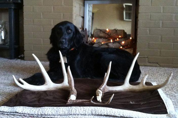 //www.northamericanwhitetail.com/files/best-shed-finds-of-2014/shed_23.jpg