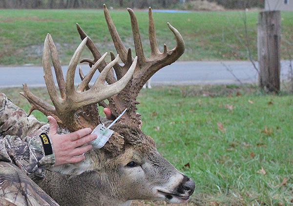 //www.northamericanwhitetail.com/files/ginormica-258-58-illinois-giant/03_cockburnbuck_113011.jpg