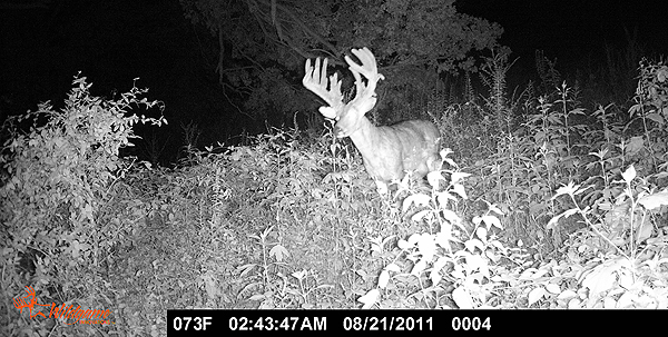 //www.northamericanwhitetail.com/files/ginormica-258-58-illinois-giant/12_cockburnbuck_113011.jpg