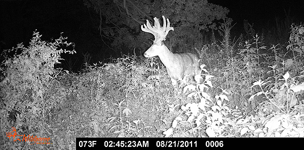//www.northamericanwhitetail.com/files/ginormica-258-58-illinois-giant/15_cockburnbuck_113011.jpg