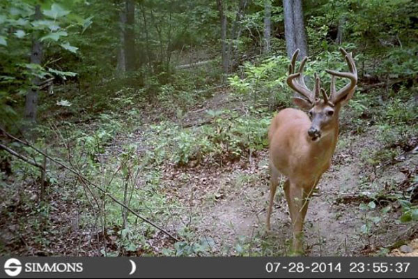 //www.northamericanwhitetail.com/files/naws-hit-list-the-best-trail-camera-photos-of-august/aaron_mcgraw_1.jpg