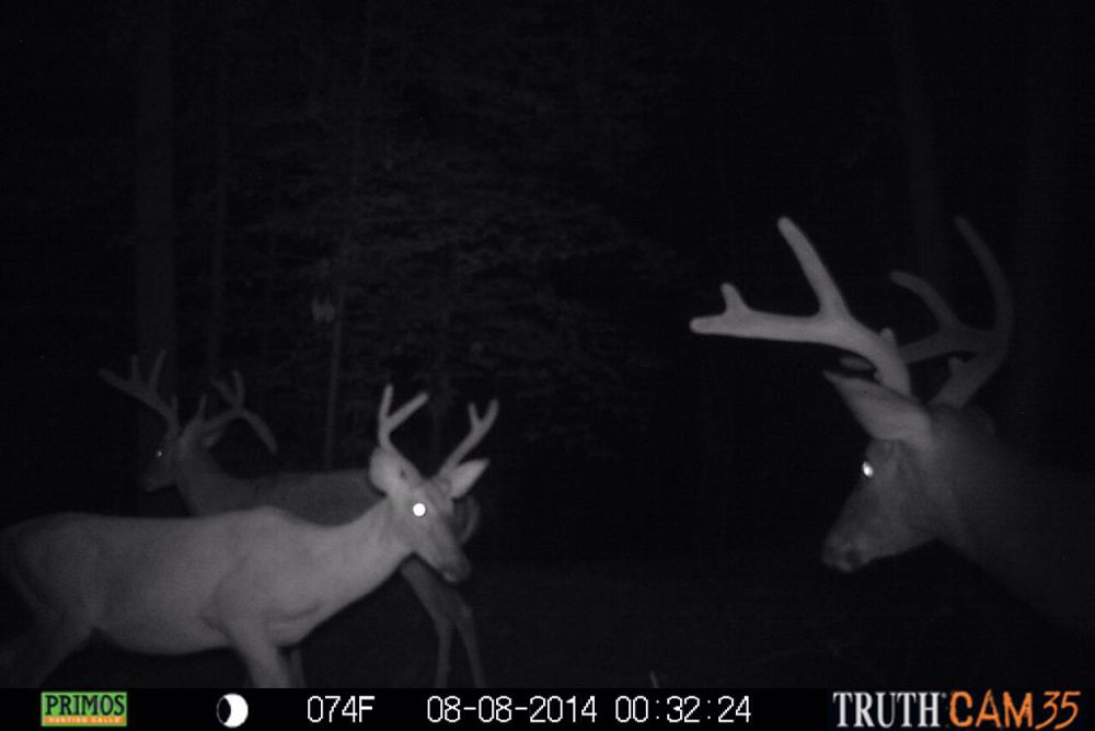 //www.northamericanwhitetail.com/files/naws-hit-list-the-best-trail-camera-photos-of-august/andrew_belvis.jpg