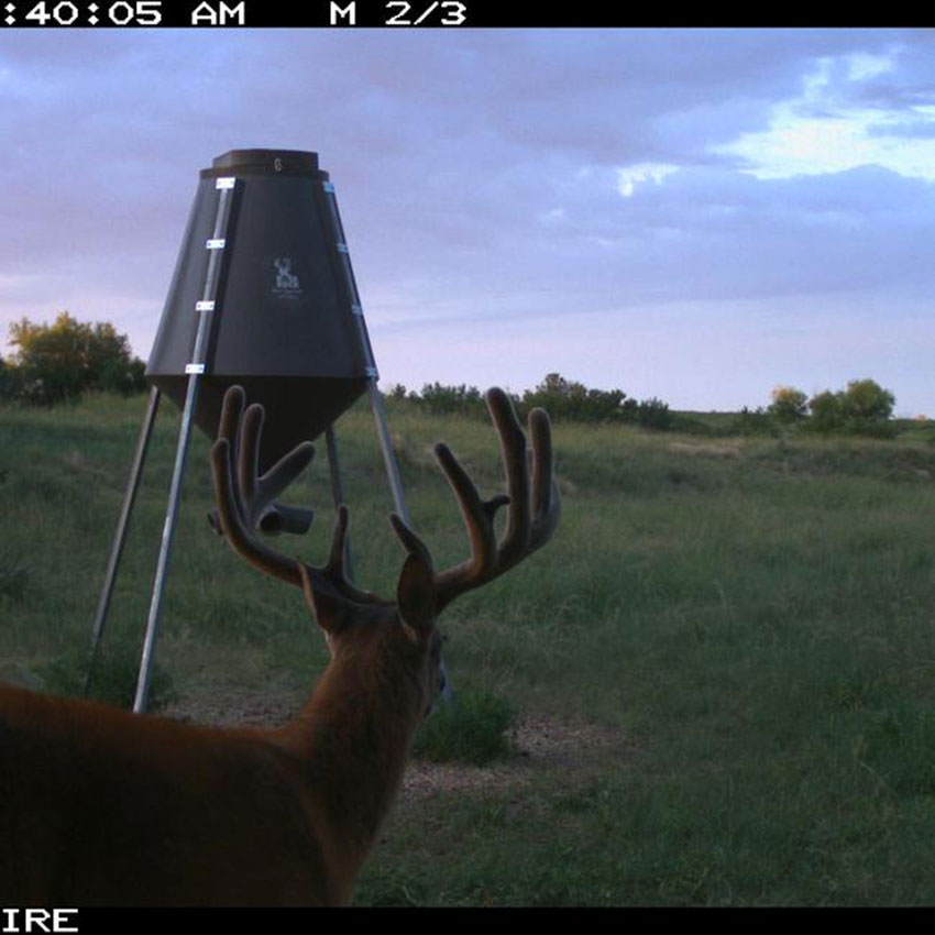 //www.northamericanwhitetail.com/files/naws-hit-list-the-best-trail-camera-photos-of-august/drew_merz_2.jpg
