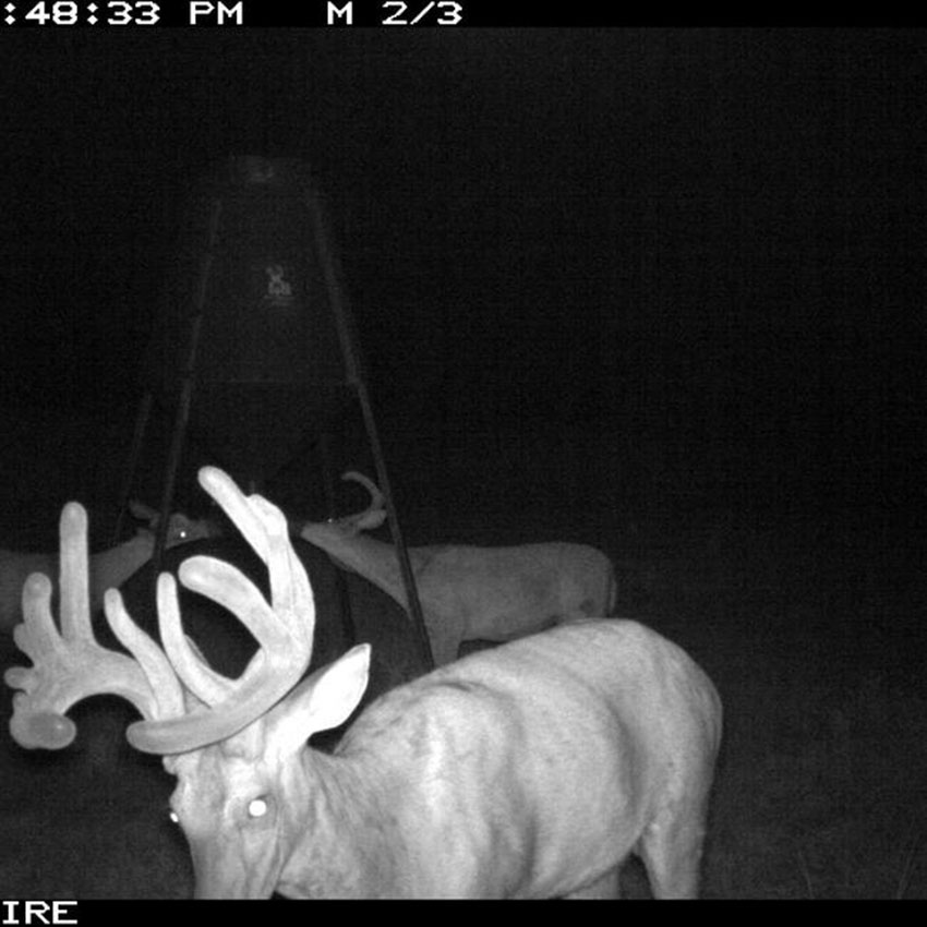 //www.northamericanwhitetail.com/files/naws-hit-list-the-best-trail-camera-photos-of-august/drew_merz_3.jpg