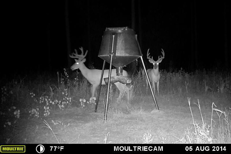 //www.northamericanwhitetail.com/files/naws-hit-list-the-best-trail-camera-photos-of-august/jared_graddy_2.jpg