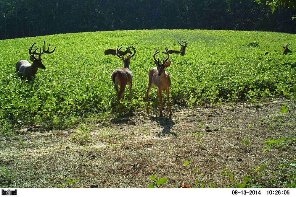 //www.northamericanwhitetail.com/files/naws-hit-list-the-best-trail-camera-photos-of-august/jonathan_collier_3.jpg