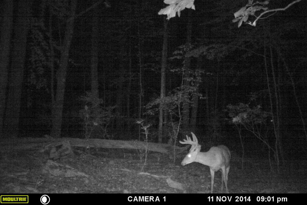 //www.northamericanwhitetail.com/files/naws-hit-list-the-best-trail-camera-photos-of-august/kyle_-tasselmyer_1.jpg