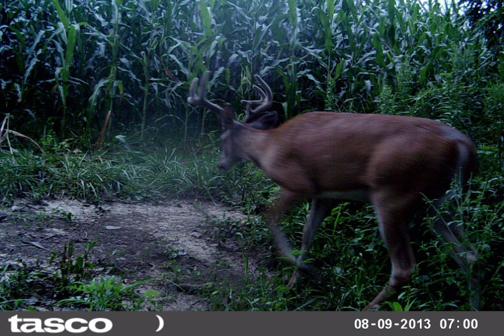 //www.northamericanwhitetail.com/files/naws-hit-list-the-best-trail-camera-photos-of-august/louis_davies.jpg