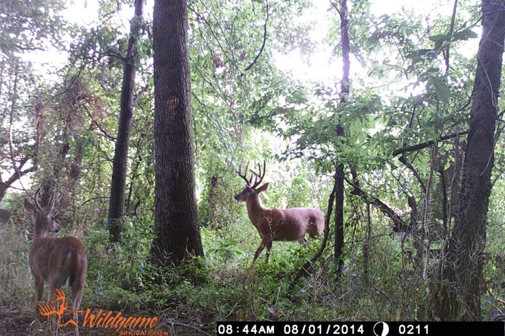 //www.northamericanwhitetail.com/files/naws-hit-list-the-best-trail-camera-photos-of-august/matt_pritchet_1.jpg