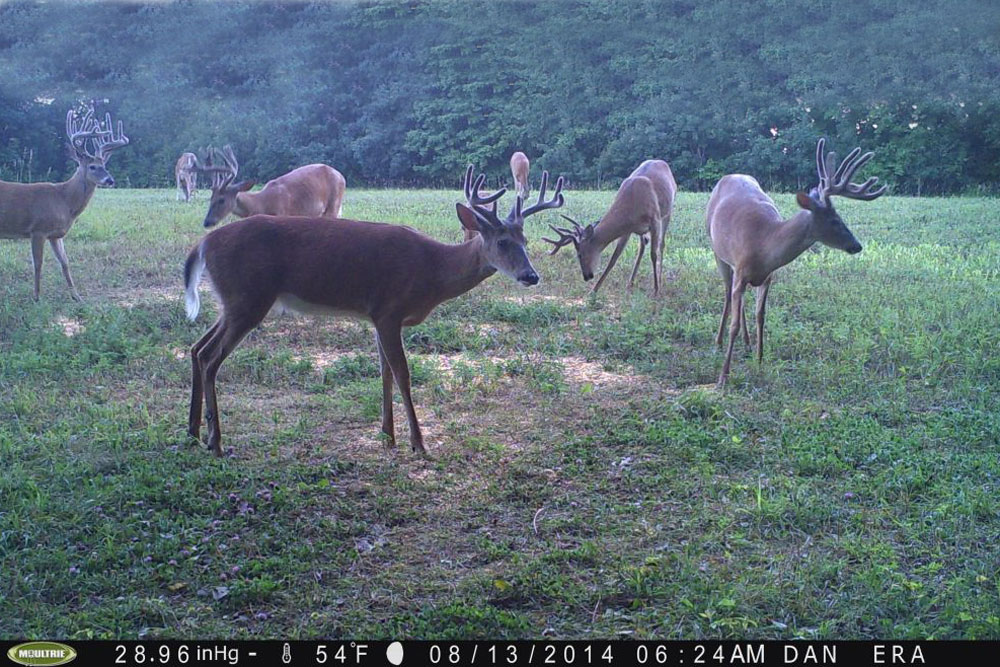 //www.northamericanwhitetail.com/files/naws-hit-list-the-best-trail-camera-photos-of-august/nick_witte_1.jpg