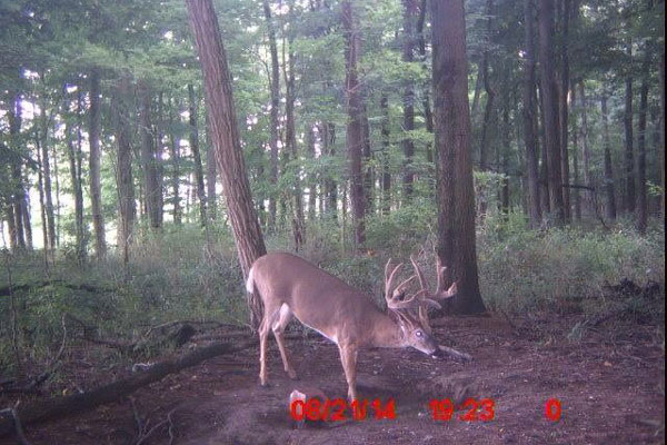 //www.northamericanwhitetail.com/files/naws-hit-list-the-best-trail-camera-photos-of-august/steve_wilson_1.jpg