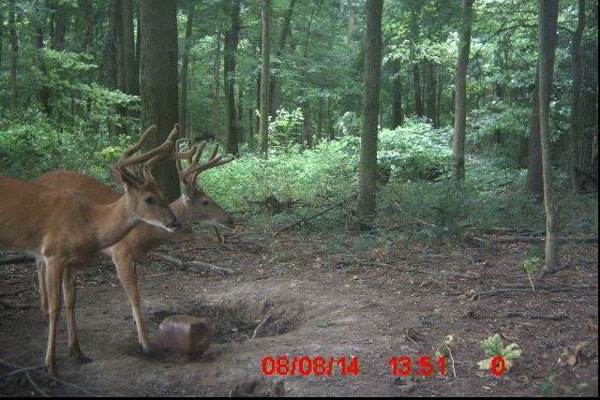 //www.northamericanwhitetail.com/files/naws-hit-list-the-best-trail-camera-photos-of-august/steven_wilson_1.jpg