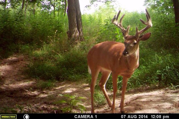 //www.northamericanwhitetail.com/files/naws-hit-list-the-best-trail-camera-photos-of-august/steven_wilson_2.jpg