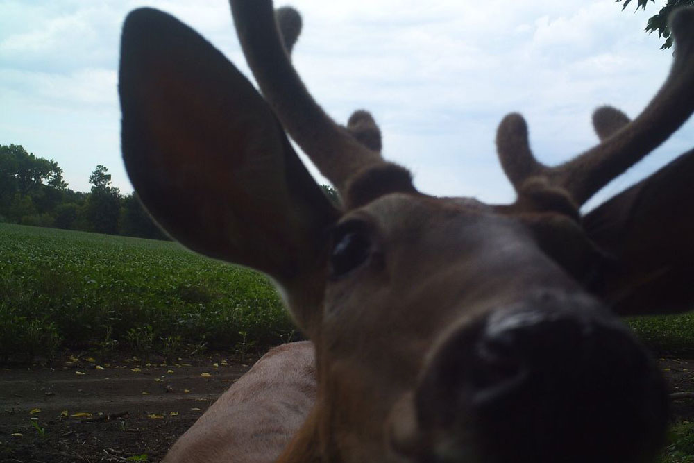 //www.northamericanwhitetail.com/files/naws-hit-list-the-best-trail-camera-photos-of-august/sutton_carpenter_1.jpg