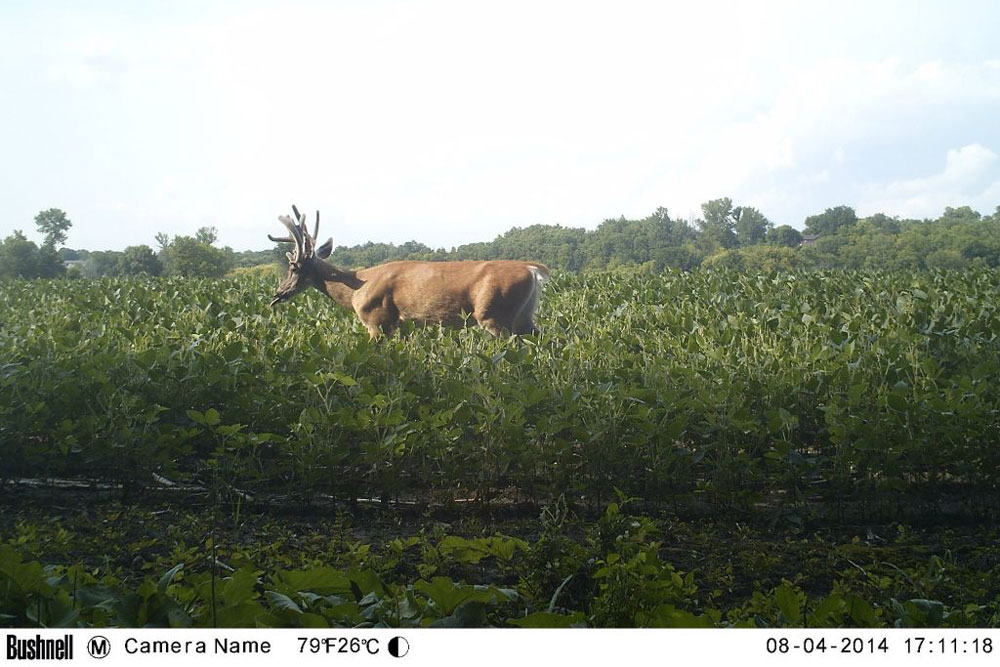 //www.northamericanwhitetail.com/files/naws-hit-list-the-best-trail-camera-photos-of-august/sutton_carpenter_2.jpg