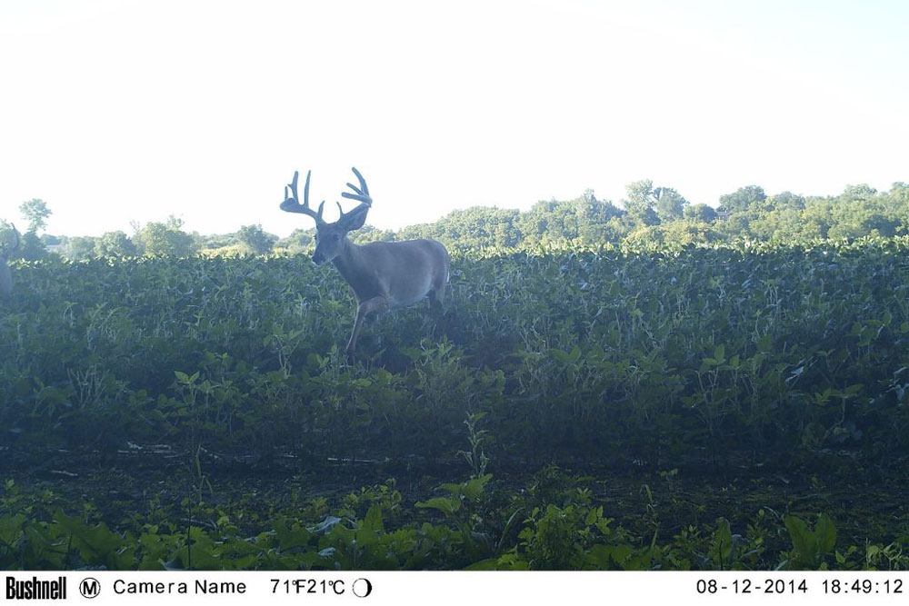 //www.northamericanwhitetail.com/files/naws-hit-list-the-best-trail-camera-photos-of-august/sutton_carpenter_3.jpg