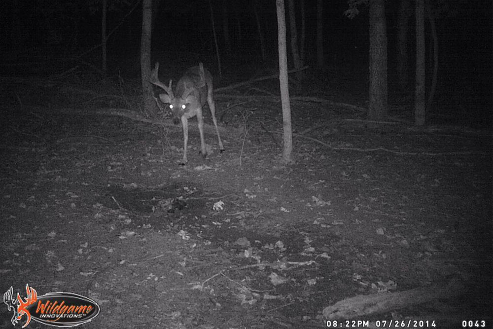 //www.northamericanwhitetail.com/files/naws-hit-list-the-best-trail-camera-photos-of-august/tom_draper.jpg
