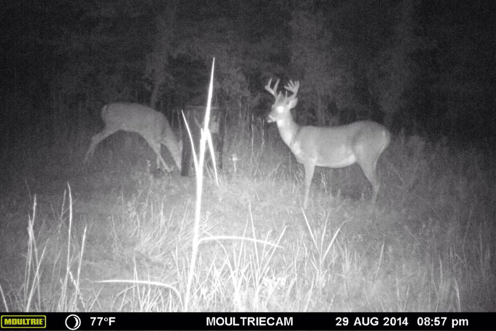 //www.northamericanwhitetail.com/files/naws-hit-list-the-best-trail-camera-photos-of-august/tyson_hilyard_3.jpg