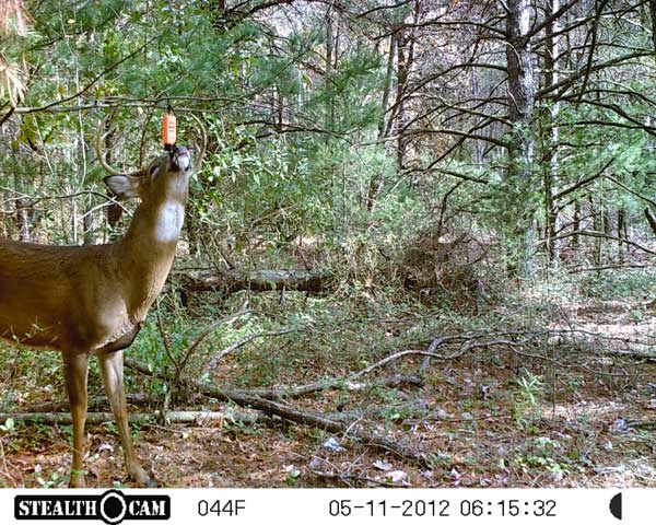 //www.northamericanwhitetail.com/files/stealth-trail-camera-photos/01_stealth_cam.jpg