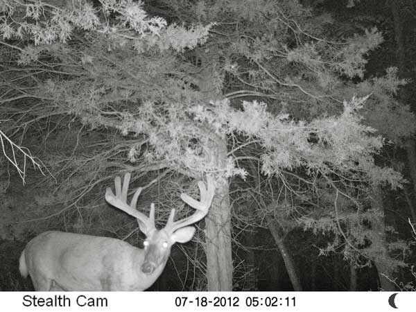 //www.northamericanwhitetail.com/files/stealth-trail-camera-photos/03_sunp0059.jpg