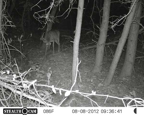 //www.northamericanwhitetail.com/files/stealth-trail-camera-photos/05_zx7-deer-night-3.jpg