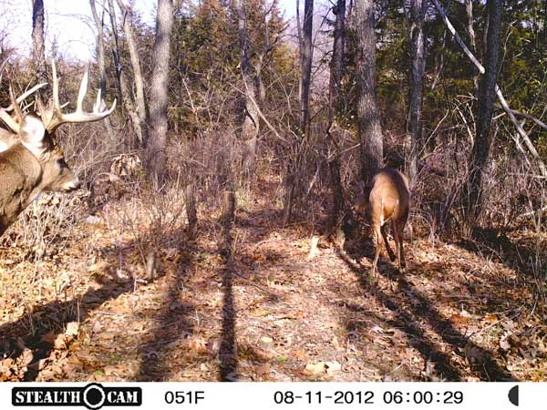 //www.northamericanwhitetail.com/files/stealth-trail-camera-photos/06_15-point-5.jpg