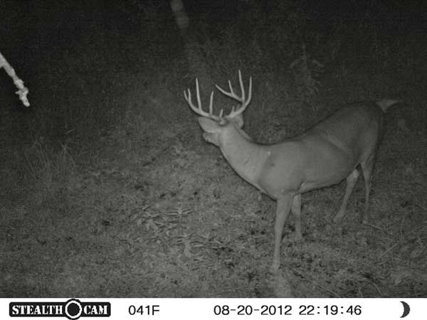 //www.northamericanwhitetail.com/files/stealth-trail-camera-photos/09_sunp0108.jpg