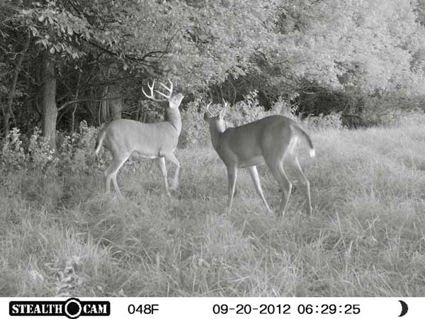 //www.northamericanwhitetail.com/files/stealth-trail-camera-photos/11_zx7-deer-night-4.jpg