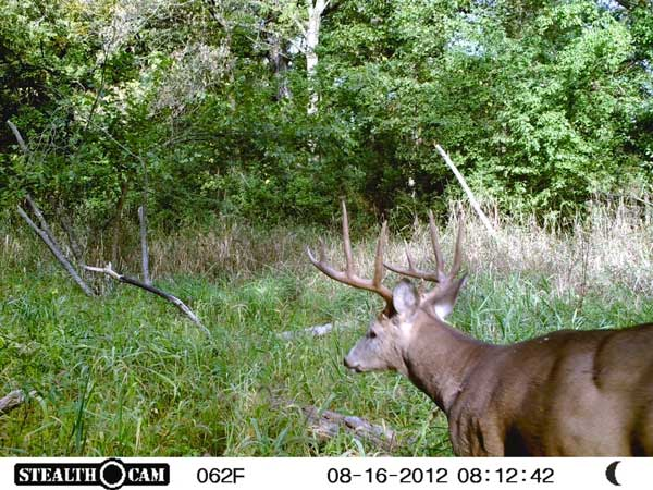 //www.northamericanwhitetail.com/files/stealth-trail-camera-photos/13_zx7-deer-day-1.jpg