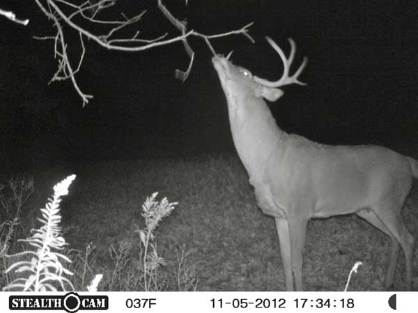 //www.northamericanwhitetail.com/files/stealth-trail-camera-photos/16_zx7-deer-night-7.jpg