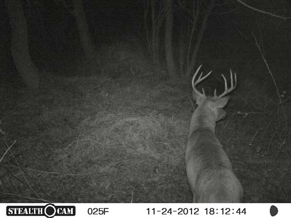 //www.northamericanwhitetail.com/files/stealth-trail-camera-photos/19_zx7-deer-night-2.jpg