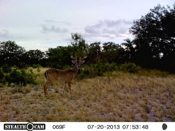 //www.northamericanwhitetail.com/files/stealth-trail-camera-photos/21_sunp0156.jpg