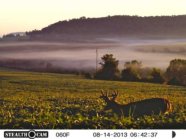 //www.northamericanwhitetail.com/files/stealth-trail-camera-photos/22_sunp0250.jpg