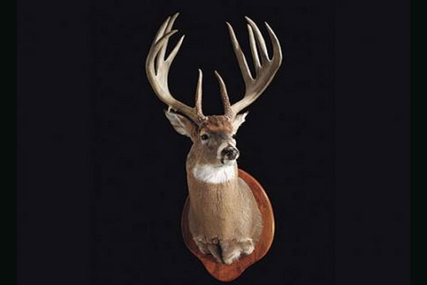 //www.northamericanwhitetail.com/files/top-10-pope-and-young-typicals-of-all-time/curt-van-lith-buck.jpg