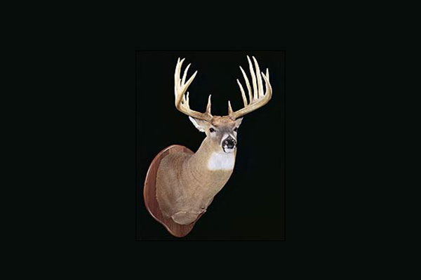 //www.northamericanwhitetail.com/files/top-10-pope-and-young-typicals-of-all-time/lloyd-goad-buck.jpg