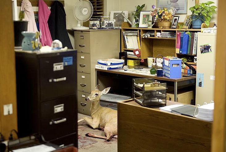 Deer crash through window of Peoria business