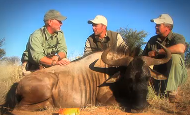 South African Wildebeest Hunt