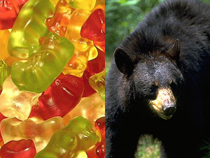There are red, green, yellow, orange and clear colored gummi bears, but a color not represented in
