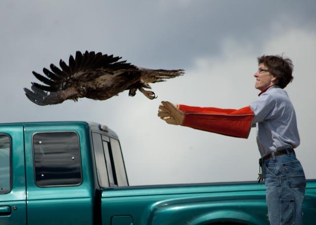 eagle release 3