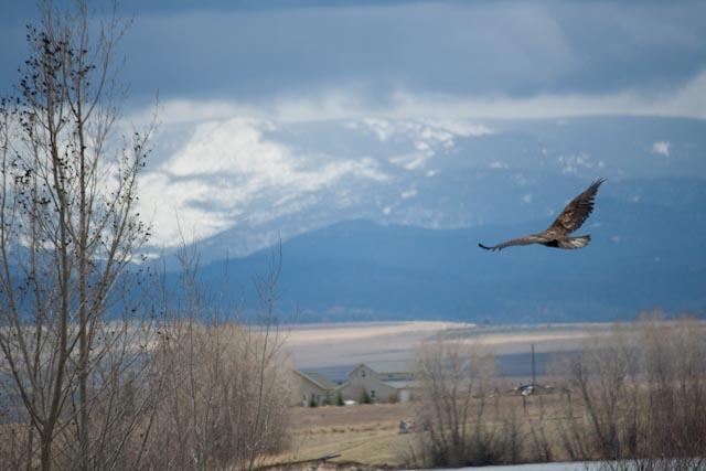 eagle release 5