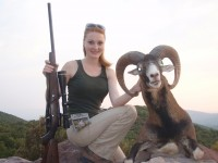 European Mouflon in Macedonia
