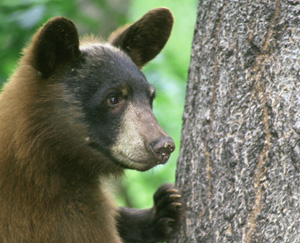 We don't expect humans to be bears' best friends. After all, hunts like this don't exactly say,