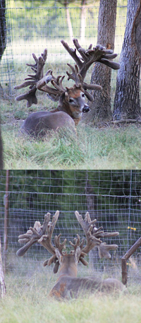 Have You Seen the Million-Dollar Buck?