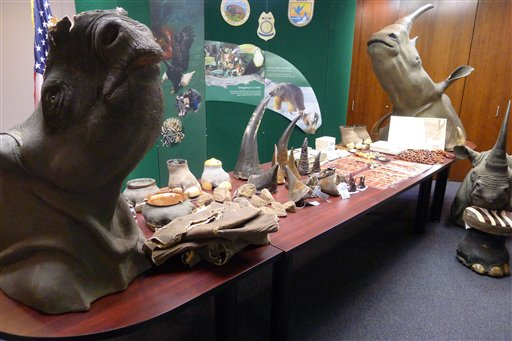 Rhino Horn Ring Broken Up by Federal Agents