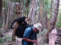 A monkey on my back beats a deadly microorganism in my GI tract.