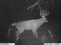 Kansas-buck