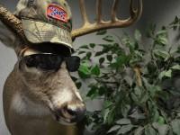 Stupid-deer